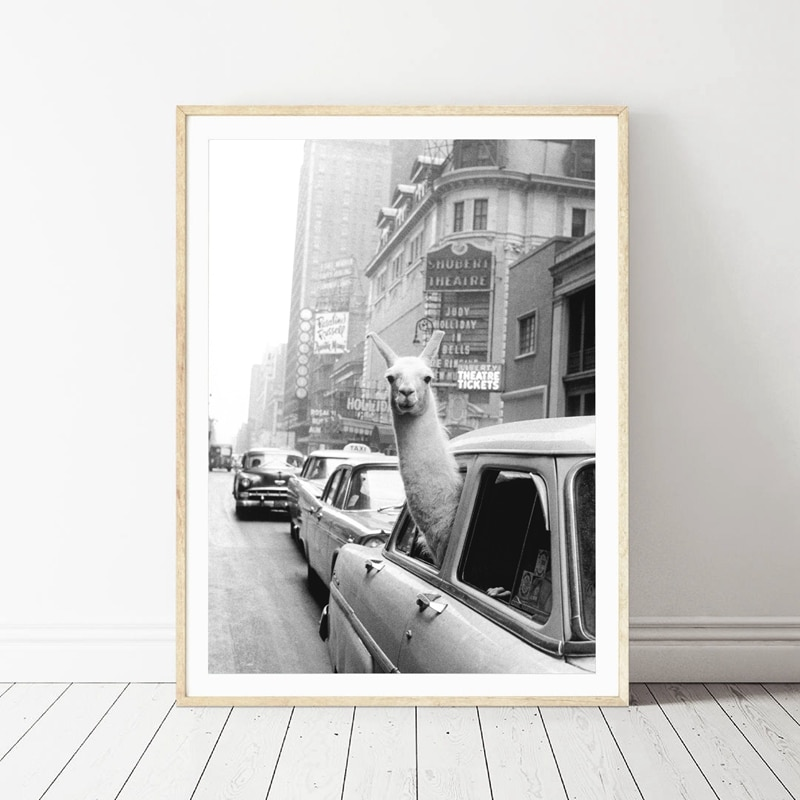 Llama in a taxi on Times Square  New York City – 60×80 cm No Frame